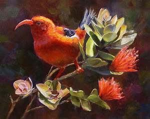 Hawaiian IIwi Bird And Ohia Lehua Flower Painting by Karen ...