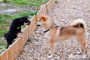 Laisser Un Chien Seul Quand On Travaille : prendre ou ne pas prendre d 39 autres chiens un deuxi me chien un troisi me voir un quatri me ~ Medecine-chirurgie-esthetiques.com Avis de Voitures