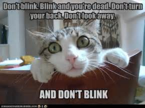 cats don t the operacats weeping cats don t blink