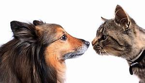 how to introduce a dog to a cat step by step guide With how to introduce a puppy to a dog