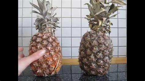 Wann Entsteht Schimmel by Das Pokern Mit Der Ananas Wann Ist Sie Reif Reife