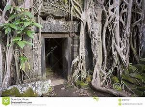 Angkor Wat Jungle Temple Overgrown Roots Stock Photo ...
