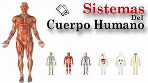 Sistemas Del Cuerpo Humano 1  10 - Introduccion