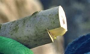 Baumstumpf Verrotten Beschleunigen : baumschnitt und baumpflege baumschnitt ~ Watch28wear.com Haus und Dekorationen