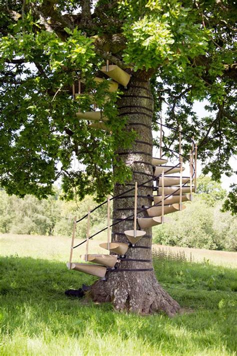strap  spiral staircase   tree  tools needed
