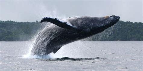 Walvissen Sainte Marie Island | Walvissen Madagascar