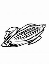 Corn Coloring Sheet Kernel Template Colouring sketch template