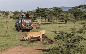 Masai Mara  Quando Andare   Meteo  Clima  Tabella E Diagramma