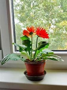 Indoor, Plants, Help, You, Sleep, Better