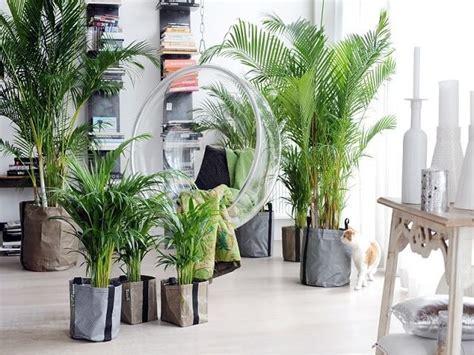 jenis tanaman hias ruangan bisa membuat rumah