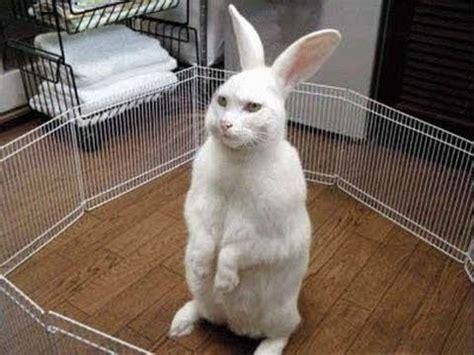 funny rabbit video funny animal youtube