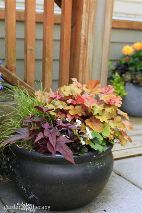 decorative ideas  creating  summer container garden