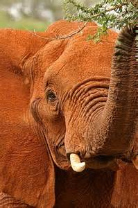 Safari Animals Elephant