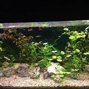 Aquarium 120l Mit Unterschrank : aquarium 120l kleinanzeigen tiermarkt deinetierwelt ~ Frokenaadalensverden.com Haus und Dekorationen