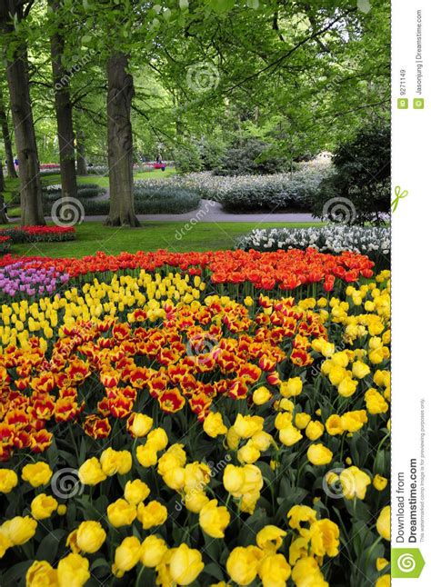 tulip flower garden free stock tulip garden royalty free stock images image 9271149