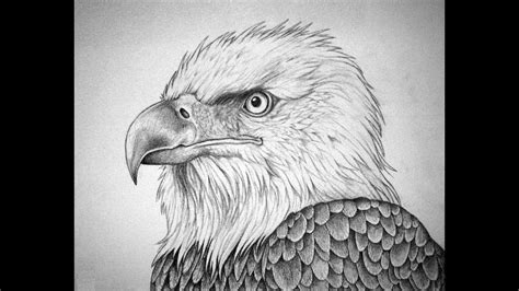 huge collection  bald eagle head drawing