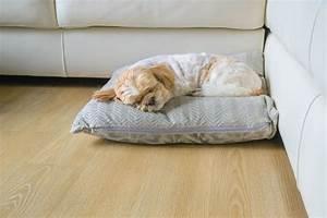 Coussin Pour Dormir : coussin chauffant chien crit res de choix et prix ooreka ~ Melissatoandfro.com Idées de Décoration