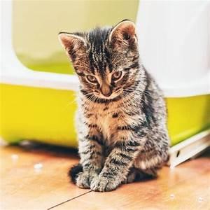 Litiere Chat Anti Odeur : astuces contre l 39 odeur de la liti re pour chat ~ Melissatoandfro.com Idées de Décoration
