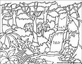 Rainforest Drawing Tropical Animals Background Drawings Getdrawings sketch template