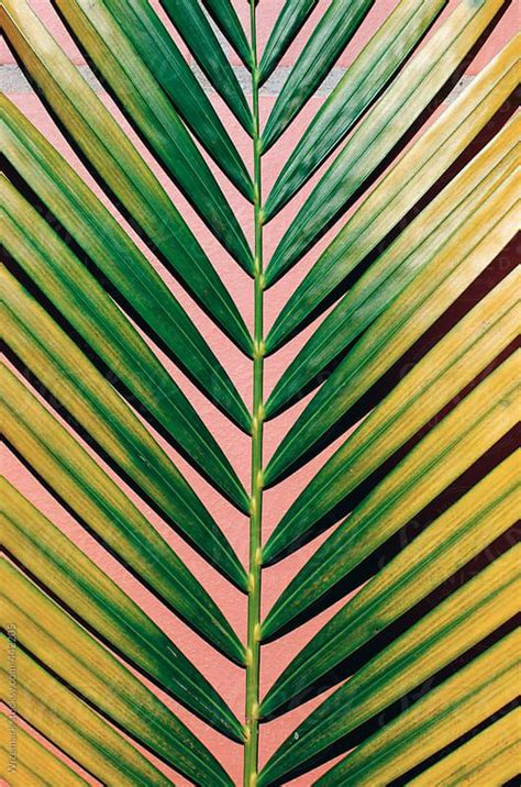 leaf pattern abstract floral tropical tree alike