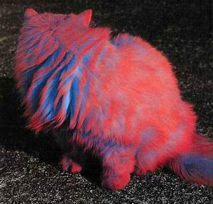 blue cat colored colors fur red image on