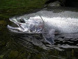 Washington State – Olympic Peninsula – Guided Steelhead ...