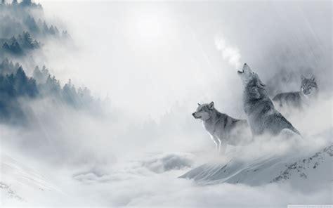 Wolf Desktop Wallpaper Hd by Wolves Desktop Wallpaper 183 Wallpapertag