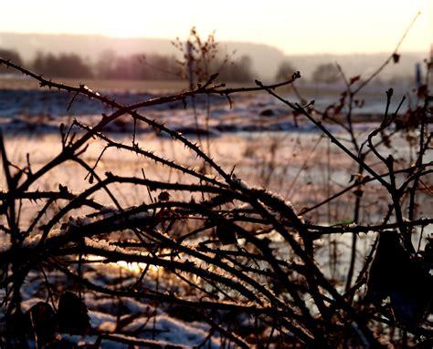 Mit Dornen by Dornen Foto Bild Landschaft Natur Bilder Auf