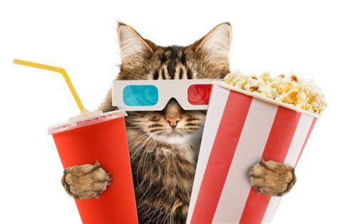 Cat Popcorn Movie Film Hollywood  Malwaretips Forums