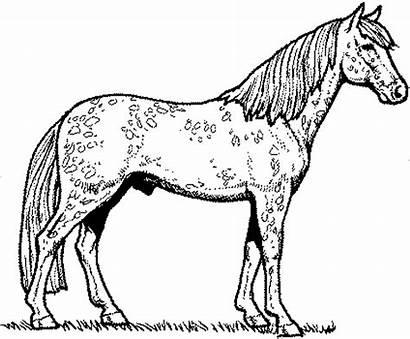 Horse Coloring Fun Printable Supplies Stumble Tweet