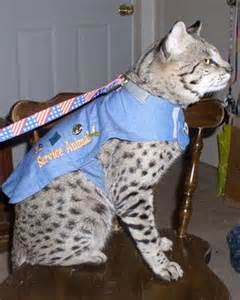 service cats for anxiety renegades save our service animals service animals