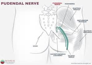 Pelvic Floor Therapy Exercises by Pudendal Neuralgia Treatment Amp Symptoms Whria