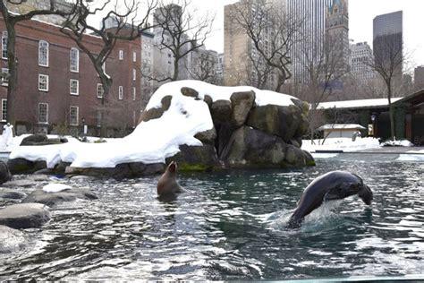 zoo central park winter visit centralpark perfect expand jpe dsc