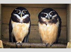 Animals Birdworld