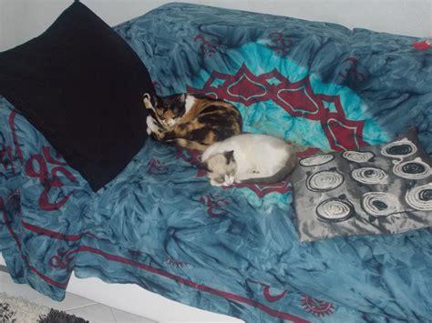 cerco in regalo cerco gattini in regalo petpassion
