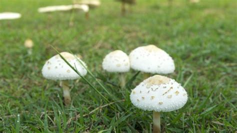 pilze im garten entfernen pilze im rasen entfernen und vorbeugen