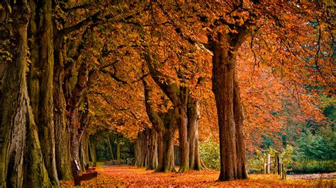 Autumn Fall Backgrounds Computer by Fall Wallpapers Hd Pixelstalk Net