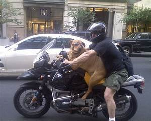 Dog Rides Motorcycle Down 5th Ave. Wearing... | LOLnyc