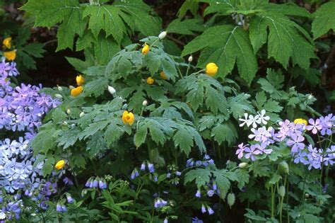 shade garden flowers photos landscaping gardening ideas