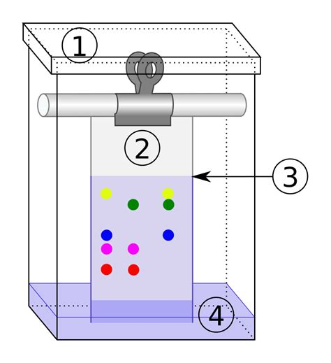 Chromatography Paper File Chromatography Tank Svg Wikimedia Commons