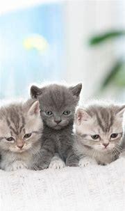 Animal / Cat (1080x1920) Mobile Wallpaper   Pretty cats ...