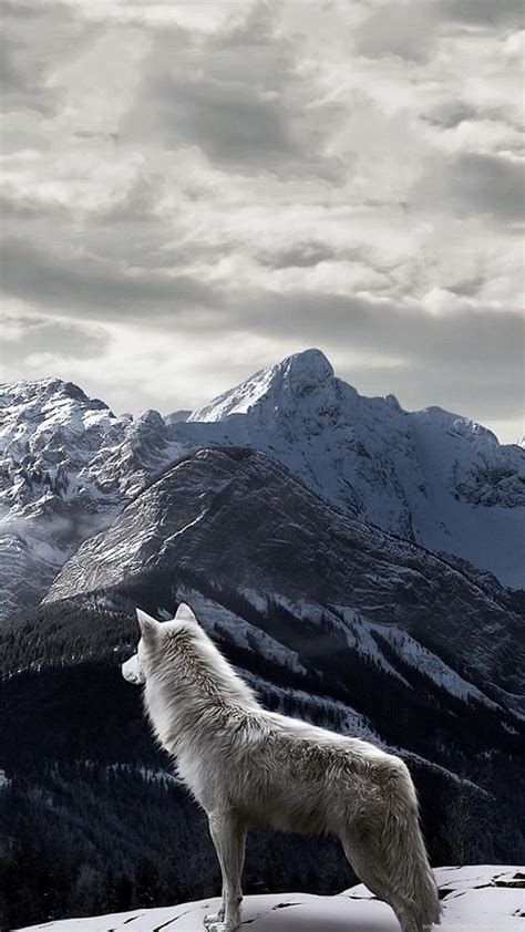 Animal Wallpaper For Iphone - iphone 5 animal wolf wallpapers id 253660 desktop background