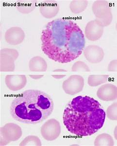 Blue Histology - Blood