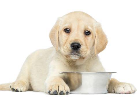 dog food  brand fundacion mi mascota