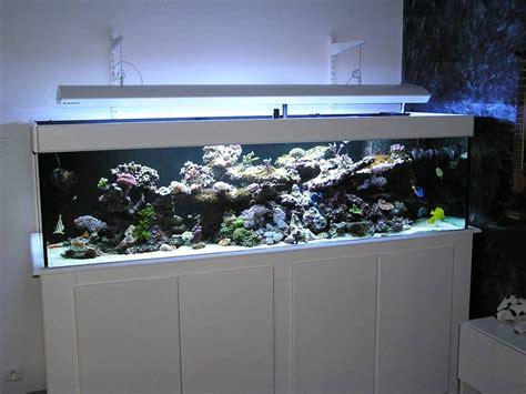 achat aquarium recifal complet achat aquarium recifal complet