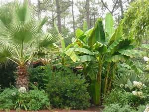 Plantes Exotiques Rustiques : cr er un jardin exotique chez vous jardin exotique de ~ Melissatoandfro.com Idées de Décoration