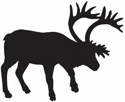 Deer Silhouette Transparent Clipart Clip Fallow Moose