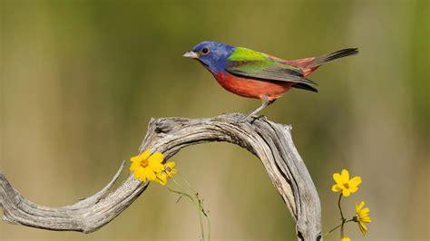 wallpaper texas birds bird images  hd image
