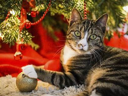 Christmas Happy Pet Pets Give Cats Holiday