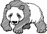 Panda Coloring Pages Bear Giant Cute Printable Realistic Adults Drawing Line Clipart Pandas Mammals Bears Bamboo Worksheets Chinese Animals Getdrawings sketch template